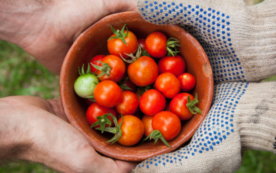 Pourquoi consommer local ? Avantages et inconvénients