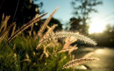 L'impact du stress sur l'immunité