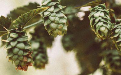 Les Brasseurs Savoyards, des bières BIO et locales comme on les aime !