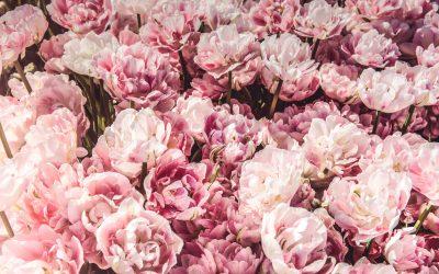 Naturopathie : Comment réduire son stress et apaiser son esprit avec les élixirs floraux ?
